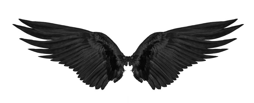 black wing isolated on white background.