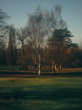 Sun sets over park