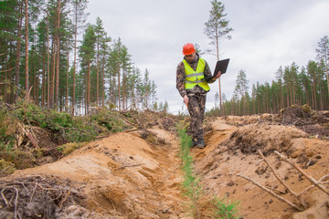Forest engineer checks the quality of tree planting. An environmentalist with a computer records the planted seedlings. Young trees planted on the site of a felled forest. Real people work.
