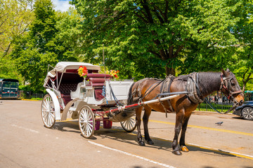Fotomurales - A horse and buggy carriage with coachman in Central Park in New York City. The carriage rides are in danger of being banned for animal safety issues.
