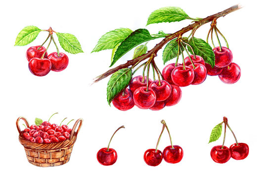 Cherry in a basket, a cherry with a leaf, a cherry on a branch. Set of watercolor illustrations for labels, menus, or packaging design.