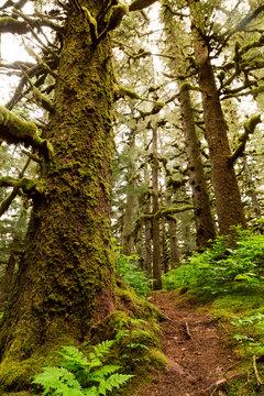 Abercrombie trees, Kodiak, Alaska