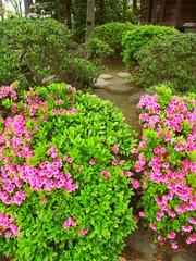 Foto auf Leinwand Garten 日本庭園に咲くピンクの躑躅