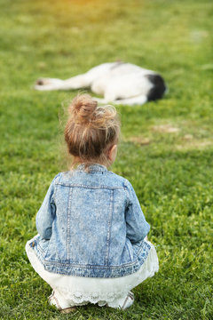 A little girl in a denim jacket sits with her back and looks at a sleeping dog in the park on the grass. On the Sunset. Concept animals and man. Childhood. Summer. Nature