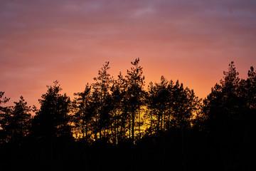 Zachód słońca w Puszczy Białej, ciemne drzewa, kolorowe niebo