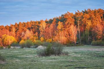 Zachód słońca w Puszczy Białej, kolorowe drzewa
