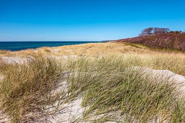 Fototapete - Landschaft in den Dünen an der Ostseeküste auf dem Fischland-Darß