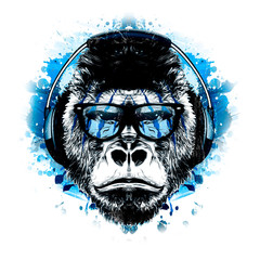 monkey on a blue background