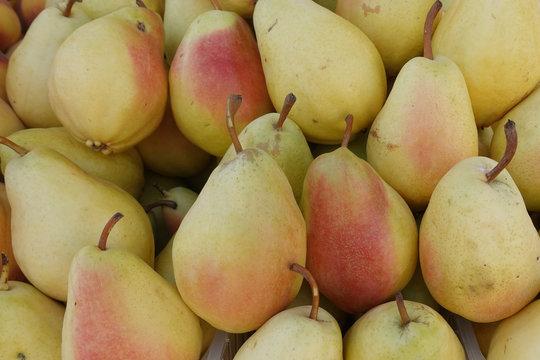 yellow pears fresh fruit background