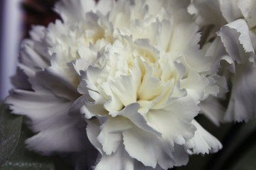 Fotobehang Close-up Of White Carnations Blooming At Home