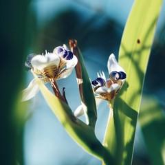 Close-up Of Fresh Iris Flowers Blooming In Garden