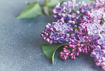 Spoed Fotobehang Lilac Spring lilac flowers on gray stone background. Copy space
