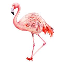 Foto op Aluminium Flamingo flamingo bird, isolated background, watercolor drawings