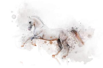 white horse watercolor Papier Peint