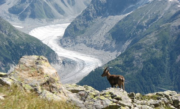 Goat Standing On Mountains