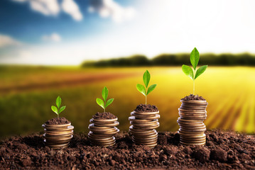Money is born soil in the bottom of the plantations. Agribusiness profit land value and agricultural startups Fototapete