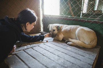 Young woman petting sad dog in animal shelter
