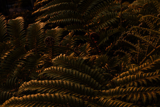 Palm Plants at Sunset in Summer