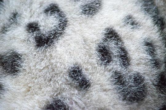 Full Frame Shot Of Leopard