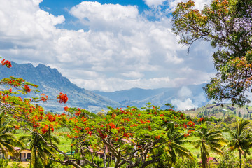 Landscape view of the Fijian countryside, showing Delonix regia, a species of flowering plant in the bean family Fabaceae, subfamily Caesalpinioideae; with mountains in the background.