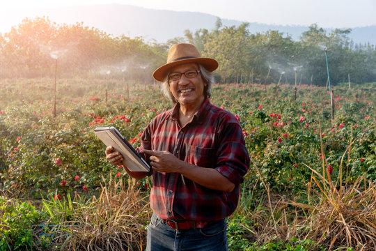 Senior Asian Farmer Holding Tablet in Field.