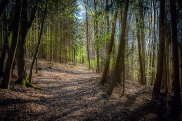 Photo on textile frame Road in forest Beautiful pathway surrounded by trees captured in Walburgiskapelle, Odenwald in Germany