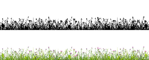 Wall Mural - purple flowers and grass isolated on white background with alpha mask for easy isolation