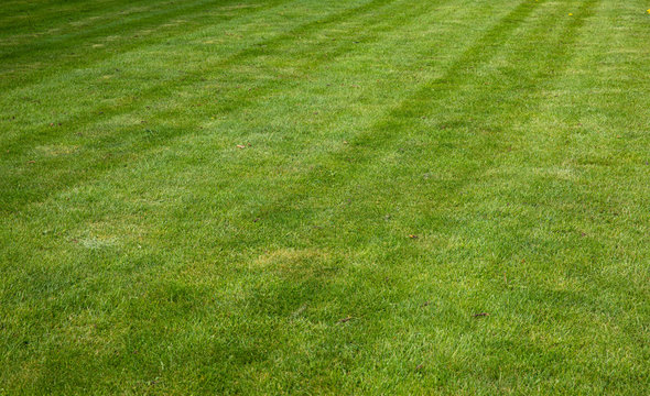 Green grass background with nice lines