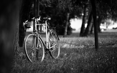 Bicycle Put Against A Tree In Nature
