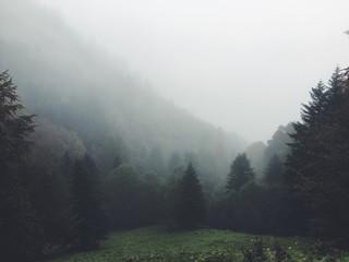 Fototapeten Grau Trees On Countryside Landscape In Foggy Weather