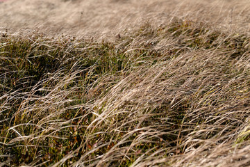 Sucha trawa - fototapety na wymiar