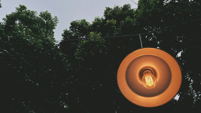 Low Angle View Of Light Bulb Hanging Against Trees