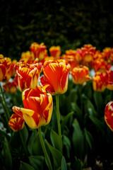 flowers in spring