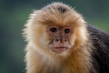 Photo sur Plexiglas Singe portrait of a monkey