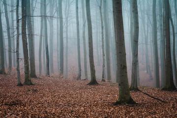 Zelfklevend Fotobehang Diepbruine mgła w lesie