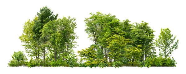Printed kitchen splashbacks White Cutout tree line. Forest and green foliage in summer. Row of trees and shrubs isolated on white background. Forest scape.