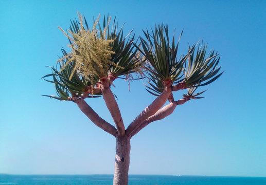 Mediterranean pink tree on the sea