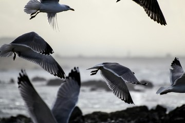 Scenic View Of Seagull Flying Mid Air Fototapete