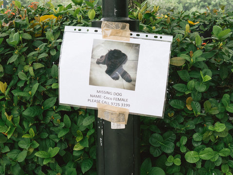 Close-up Of Missing Dog Poster On Pole