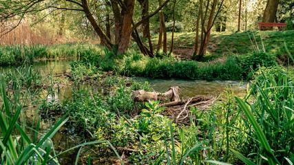 Fototapeta Parkowa rzeka kłoda zieleń obraz