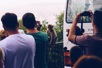 Men Photographing Monkey