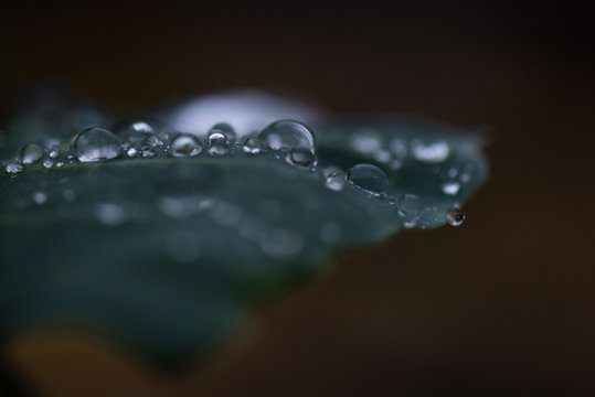 Close-up Of Water Drops On Plant Against Black Background