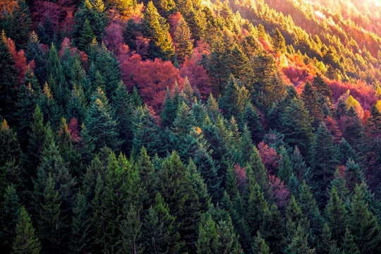 Full Frame Shot Of Trees On Mountain At Scalve Valley During Autumn