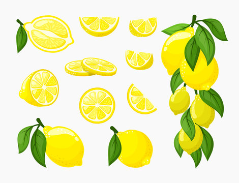 Set of lemons. Illustration of yellow citrus fresh juicy, a bunch of ripe lemon on a branch with leaves, organic vitamin , whole and cut. Vector graphics in flat style, clipart.