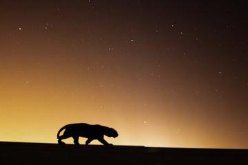 Foto auf Gartenposter Panther panthère noire dans la nuit étoilée