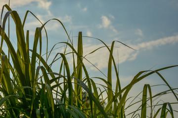 trawa na tle nieba