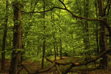 Green forest details in springtime