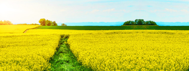 Foto auf Gartenposter Gelb Spring landscape background banner - Beautiful panorama from a Canola Field in Germany