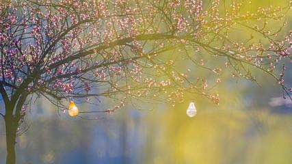 Fototapeta Wiosenne bajkowe kwitnące drzewo w ogrodzie obraz