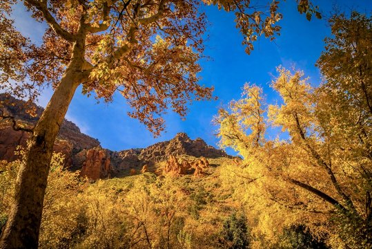 Low angle picture of mesmerizing yellow trees against a rocky hill in autumn at Sedona, Arizona